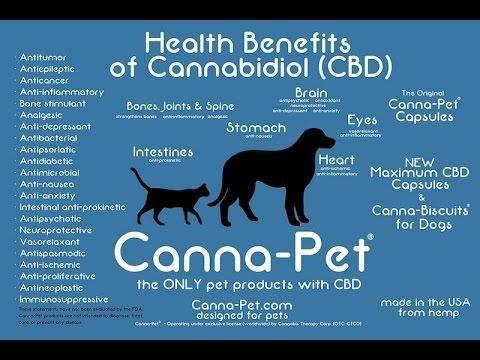 cbd-oil-for-dogs-cancer_91997625200801143827954 jpg – CTFO